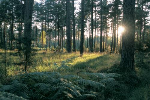 בריטניה: היער זורם להם בעורקים