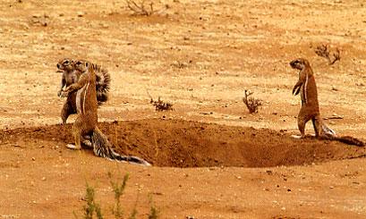 קלהרי: ציידים מלקטים במדבר