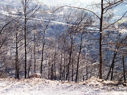 חוזרים לכרמל: עשרות אלפים טיילו באזור שנשרף