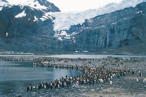 אנטארקטיקה – ממלכת החיות של איי הקרחונים