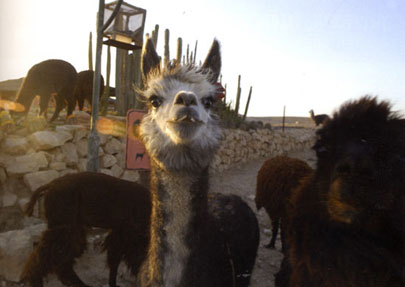 מצפה רמון, לינה: ליל רד אל המדבר