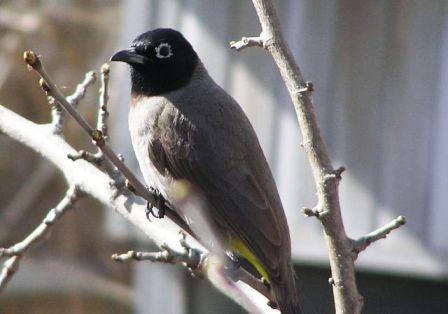 סופרים ציפורים: פרויקט לספירת ציפורים בחצר הבית