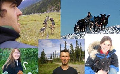 אתרים ברשת: כלבים על הקרח