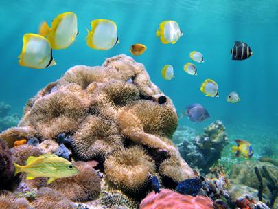האיים הקריביים – החיים מתחת למים