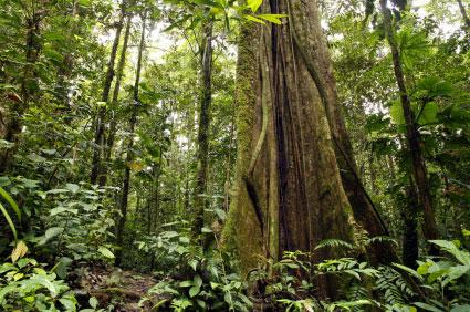 יערות הגשם בברזיל – 17 עובדות
