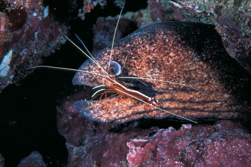 חיים תת מימיים וחברות רטובה