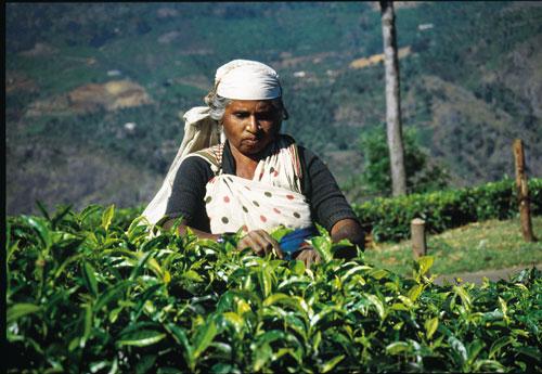 תרבות התה בעולם