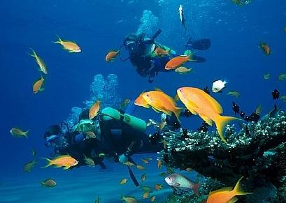 להכיר את העולם מתחת למים