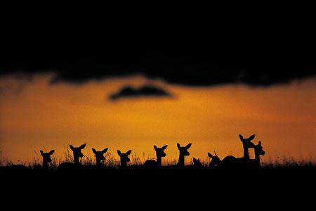 צילום – בעלי חיים באפריקה