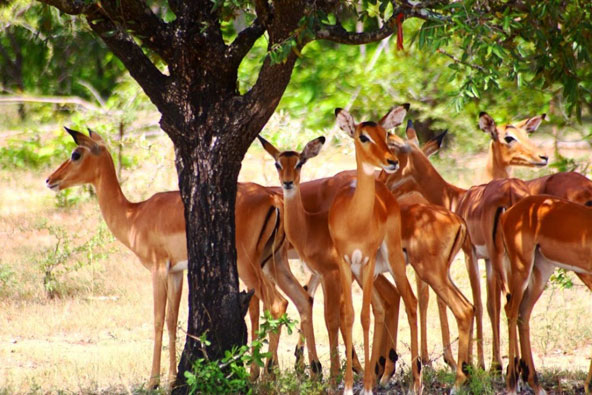שמורת סלוס, טנזניה: טבע פראי