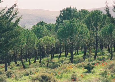 טיול ביער חניתה