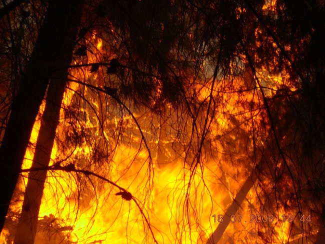 שריפות יער: תנו לגשם לנצח