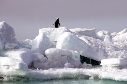 אנטארקטיקה: המקום שבו הטבע שולט