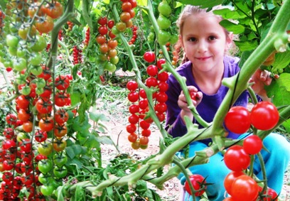 תערוכת החקלאות הגדולה בישראל תתקיים בערבה
