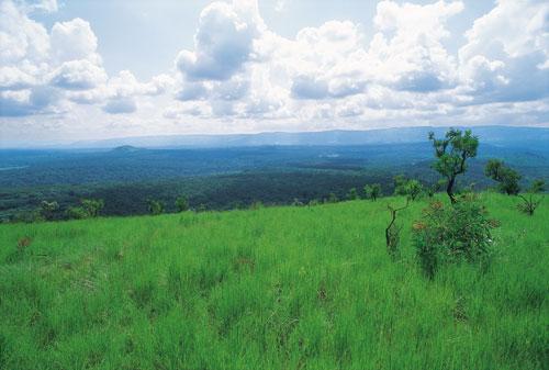 תכנית אוגנדה: כך ניצלה הסוואנה