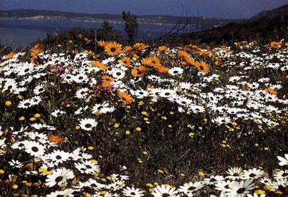דרום אפריקה: קסם הפריחה