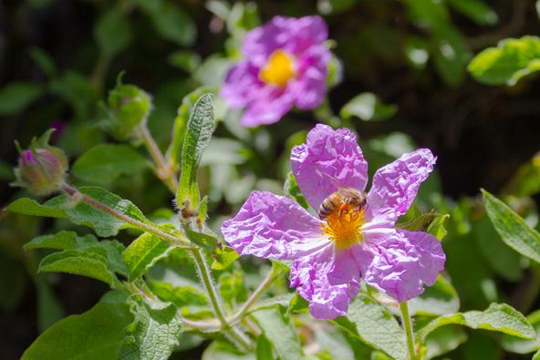 בעקבות הפריחה באזור השפלה