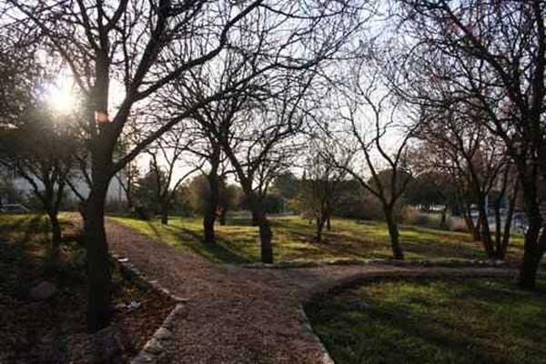 הגן הבוטני באוניברסיטה העברית אסתטיקה או בוטניקה?