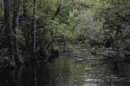 אוורגליידס, פלורידה – קדחת הביצות