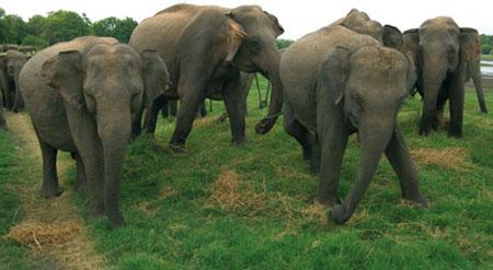 שמורות בסרי לנקה – ארץ הנמר והפיל