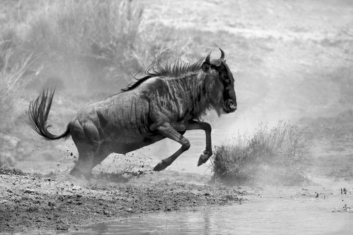 לצלם את אפריקה בשחור לבן