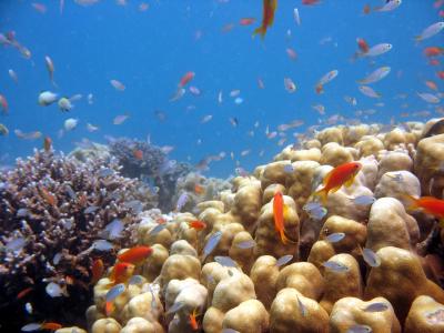הכל מתחת למים