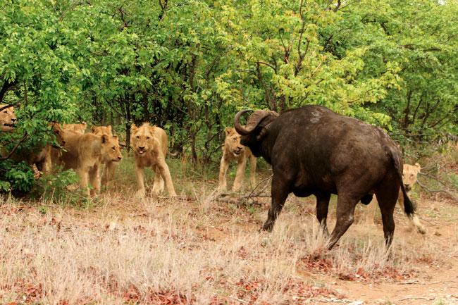דרום אפריקה – פארק קרוגר