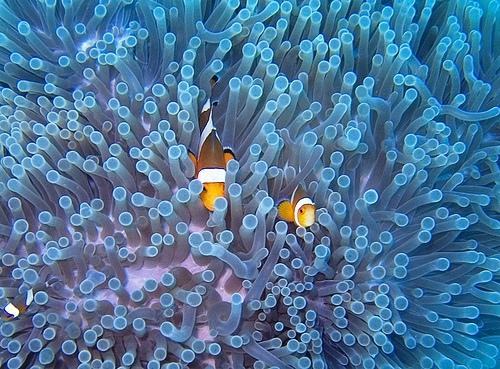 צלילה בבאלי: העולם המופלא שמתחת למים