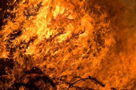 שריפות יער – בעיה עולמית