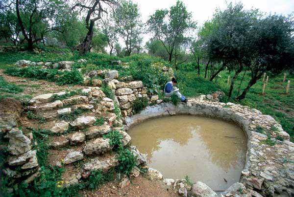 מעיינות בהרי ירושלים: קרובים אל הלב