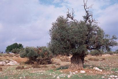 שביל ישראל: ירושלים – בית נטיף – בית גוברין (מסלול 12)
