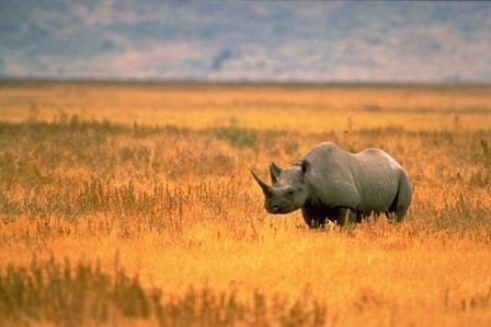 רבע מכלל היונקים בעולם נמצאים בסכנת הכחדה