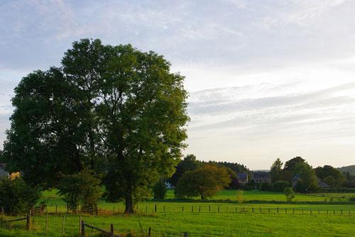 טיול ירוק בבלגיה