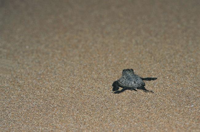צבי ים: כמו צעצועים בחול