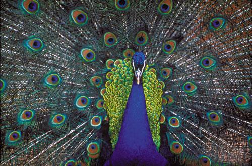 יופי בטבע: יהלומים לנצח