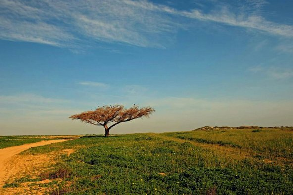 דרום ירוק: חידושים, אטרקציות ופינוקים בנגב