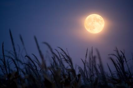 טיול דרומי – כשמעלינו חופה של כוכבים