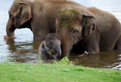 פילים: זיכרון של פיל, לב של בן אנוש