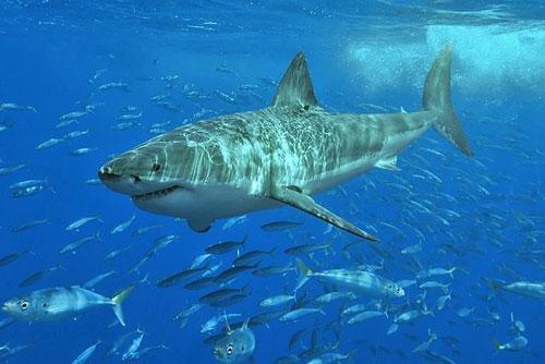 סרטון: להציץ לפה פעור של כריש