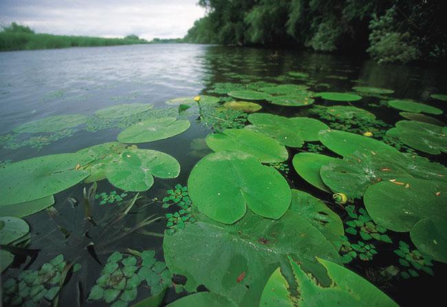 דנובה: חגיגת טבע בדלתת הנהר