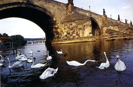 גשר קארל: שלושים פסלים מעל הנהר
