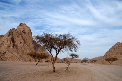 לאן הלכנו 40 שנה במדבר?