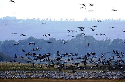 """מכ""""ם חדיש הוצב בגבול הצפון לאיתור להקות ציפורים"""