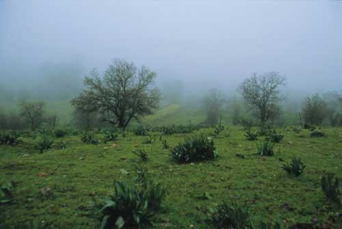גולן: היער המכושף