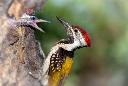 רג'סטן: שמורת הציפורים