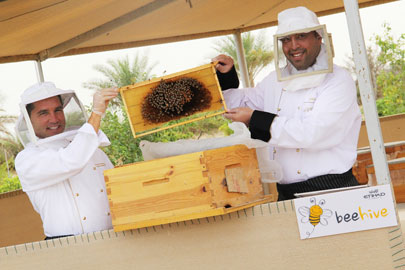 רכישה מפתיעה של חברת תעופה: תרנגולות ודבורים