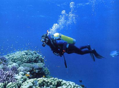 שונית האלמוגים של עקבה