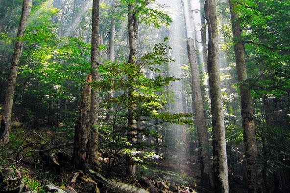 במעבה היער – יערות קסומים באירופה