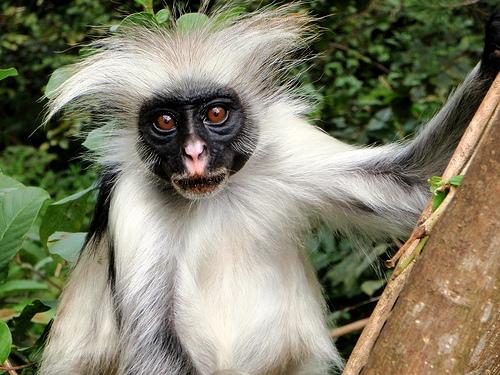זנזיבר: ציפורן, קופים וקינמון