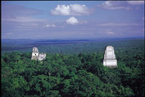 טיקאל, גואטמלה: אדון קקאו בונה הרים